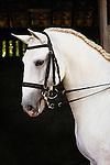 Lusitano horse, Bahia, Brazil