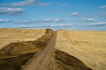 Ripe wheat fields in northeastern Washington