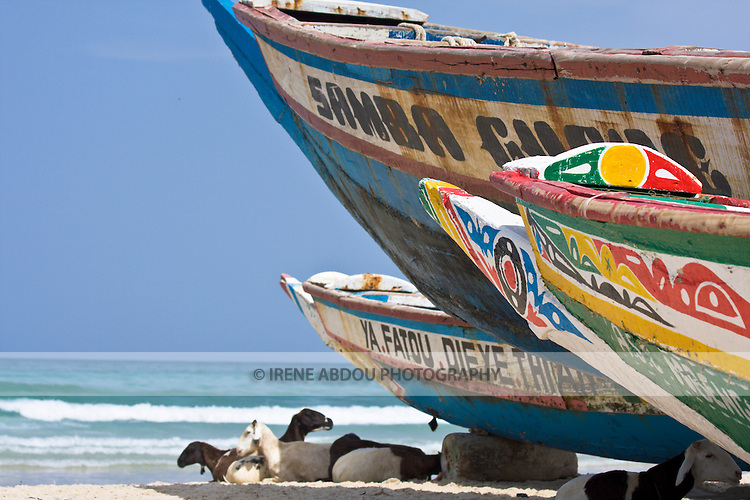 Black and white-spotted sheep and goats snooze in the shade of colorfully-painted boats that line the beach of Yoff, a fishing village 30 minutes outside of Senegal's capital city of Dakar.