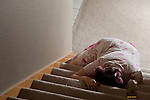 Woman lying at the bottom of stairs mystery with alcohol bottle