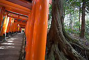 Fushimi Inari shrine, with it's many red torii gates, and cherry blossom, in Inari, near Kyoto, Japan on Sunday 16th April 2012.