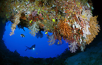 RH0414-D. Scuba diver (model released) about to enter a submerged cave on whose ceiling grow a variety of soft corals and sea fans. Palau, Pacific Ocean.<br /> Photo Copyright &copy; Brandon Cole. All rights reserved worldwide.  www.brandoncole.com