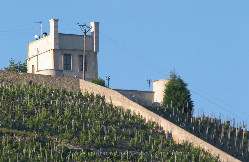 vineyard maison blanche hermitage rhone france