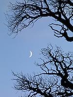 Crescent Moon & Foxtail Pine