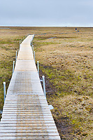 Walkways placed on the tundra in Utqiagvik (Barrow) Alaska to permit access to locations under scientific research on climate change.