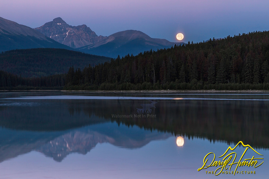 Setting moon at sunrise at Patricia Lake over Mount Fitzwilliam in Jasper National Park.