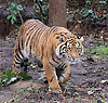 London Zoo Stocktake 5th January 2015