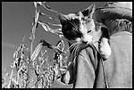 1999- Farm Cat-Dane County, Wisconsin.. http://www.steveapps.com/