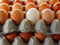 Close up of a stack egg trays stacked on top of each other. Brown eggs with one white duck egg. Individual.