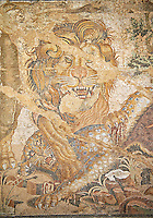 Roman mosaic of a Lion from Pompeii,  Naples Archaeological Musum, Italy