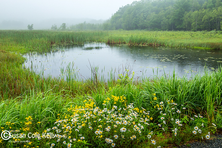 Pond on a foggy morning in Acadia National Park, Maine, USA