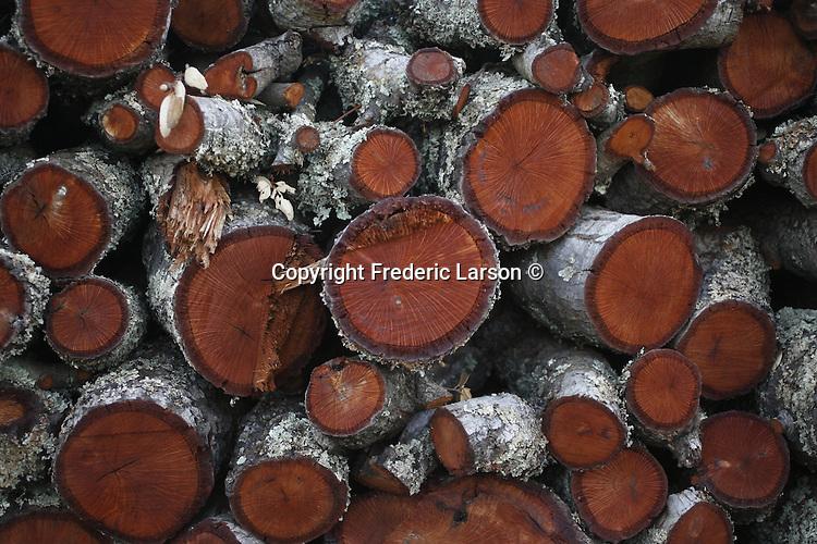 Freshly cut wood in a vineyard of Napa Valley, California.