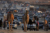 Chaos along the Million Road, crowded with camels and cars as owners and trainers proudly parade their animals for all to see. The road is named for the huge sums of casha prize camel can command.