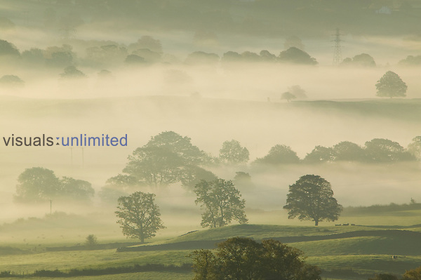Morning mist over the Kent Valley near Kendal, Cumbria, United Kingdom