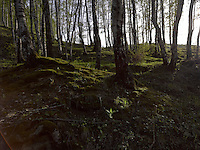 FOREST_LOCATION_90054