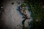 A dead cat lies in an alleyway in the Parklawn neighborhood of Modesto, Calif., February 23, 2012.