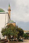 T-086 Chaste tree in Al Jazzar Mosque