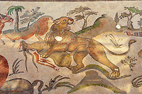 Lion killing an animal. Roman mosaics at the Villa Romana del Casale which containis the richest, largest and most complex collection of Roman mosaics in the world. Constructed  in the first quarter of the 4th century AD. Sicily, Italy. A UNESCO World Heritage Site.