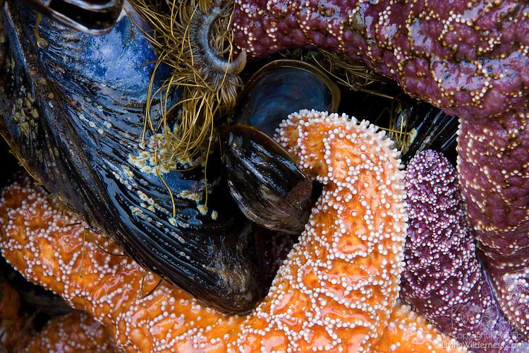 How Do Starfish Get Food