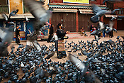 A local Tibetan Buddhist feeds the pigeon around the dome in the holy site of Boudhanath in Kathmandu, Nepal. Photo: Sanjit Das/Panos