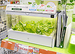 U-ing Green Farm home hydroponics gardening unit with greens in a store in Tokyo, Japan.