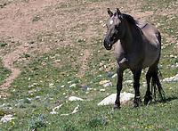 Wild Horses 2016