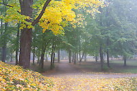 Fall Colours in Dome Hill Park, Tartu, Estonia
