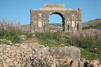 Rear view of the Triumphal Arch of Caracalla, built 217 AD by the city's governor Marcus Aurelius Sebastenus at the end of the Decumanus Maximus in honour of Emperor Caracalla, 188-217 AD, and his mother Julia Domna, Volubilis, Northern Morocco. The arch was reconstructed 1930-34 and was originally topped with a bronze chariot pulled by 6 horses. Volubilis was founded in the 3rd century BC by the Phoenicians and was a Roman settlement from the 1st century AD. Volubilis was a thriving Roman olive growing town until 280 AD and was settled until the 11th century. The buildings were largely destroyed by an earthquake in the 18th century and have since been excavated and partly restored. Volubilis was listed as a UNESCO World Heritage Site in 1997. Picture by Manuel Cohen