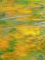 &quot;FALL IMPRESSIONS&quot;<br /> <br /> A Nature's impressionist palette of Fall color reflecting on the waters of a small pond in Montana. The gold and green is provided by aspen trees. The shimmering water provides the impressionism. <br /> <br /> ORIGINAL 24 X 36 GALLERY WRAPPED CANVAS SIGNED BY THE ARTIST $2,500. CONTACT FOR AVAILABILITY.