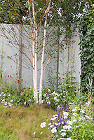 Birch trees in late spring garden woith flowers