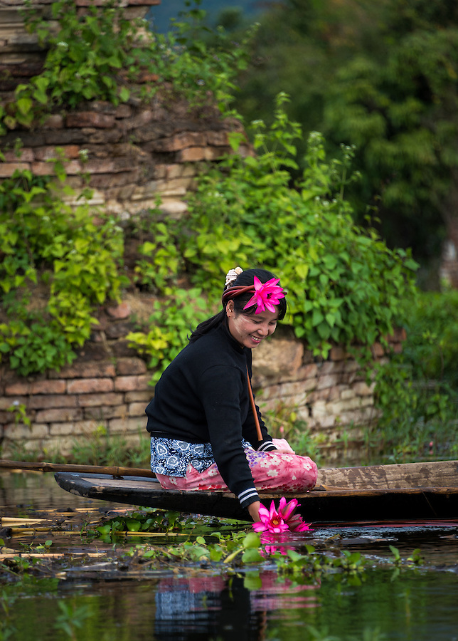 INLE LAKE, MYANMAR - CIRCA DECEMBER 2013: Burmese woman collecting lotus flowers in Sankar village (or Samka ). A small village located in the south of Inle Lake.