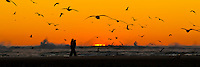 Couple walking along sandbar at sunset in Cannon Beach, OR with many seagulls flying overhead in silhouette and sun sinking into the sea with waves crashing in panoramic format.
