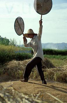 Winnowing rice with fan like paddles. Guangxi Province