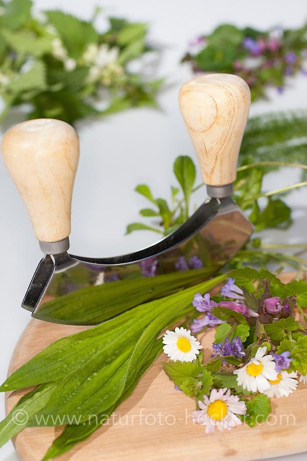 Essbare Wildkräuter, Kräuter werden mit Wiegemesser, Messer auf einem Brettchen zerkleinert, Ernte, Gänseblümchen (Bellis perennis), Taubnessel (Lamium spec.), Spitz-Wegerich (Plantago lanceolata), Gundermann (Glechoma hederacea), Edible wild herbs, herbs are crushed with mezzaluna, knife on a small board, harvest, English Daisy, Plantain, Ribwort, Alehoof, Ground Ivy, Dead Nettles