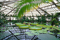 Belgium, Flanders, Flemish Brabant, Meise: Greenhouse at National Botanical Gardens | Belgien, Flandern, Flaemisch-Brabant, Meise: Gewaechshaus im botanischen Garten Nationale Plantentuin van Belgi&euml;