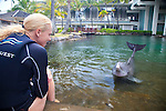 The Kahala Resort and Hotel, located in Honolulu on the souths side of Diamond Head, offers luxurious accommodations and is the only hotel in Oahu with a dolphin program.  Dolphin Quest offers guests the ability to swim with the Dolphins in the Kahala's 26,000 square food natural lagoon.