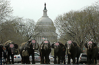 Elephant Walk infront of the US Capitol Building Sandy Schaeffer Photography - Washington DC Photographer<br />