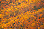 Each autumn brings a kalediscope of colors to Acadia National Park, Maine, USA