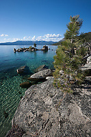 """Tree at Lake Tahoe 1"" - This tree growing on a boulder was photographed along the shoreline of Whale Beach, Lake Tahoe."