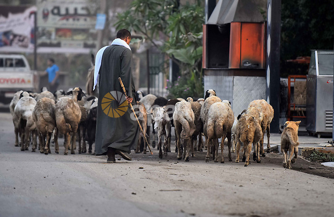 An Egyptian villager leads a flock of sheep in Birqash outside of Cairo, Egypt, Sept. 30, 2015. Photo by Amr Sayed