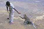 Boy Feeding Baboon A Banana