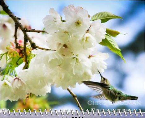 July 2011 Birds of a Feather Calendar