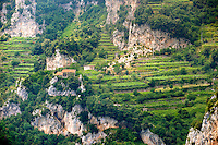 The Amalfi coast mountain vineyards  around Nocelle,  Postiano, Italy