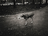 lonely, Europe, Italy, Milan, Milano, Street Photography, dog in the rain