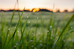 Sunrise over Freedom Farms' pasture. Soon the cows will be munching sweet grass.