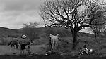 Terra de Elton Gomes Barbosa na comunidade rural Curral Velho no município de Porteirinha , Minas Gerais.  Elton Gomes Barbosa é presidente do Sindicato dos Trabalhadores Rurais de Porteirinha