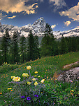 A view of the Cervino (Matterhorn in German)as seen from the highest end of the Valtournenche in Valle d'Aosta, Italy. Taken a few minutes before sunset at the end of June, when the wildflowers bloom reach their peak. This is a stitch of three horizontal frames, for better resolution and depth of field.
