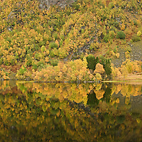 Reflections of autumn trees in Steinbakkvatnet lake, Hinnøya, Vesterålen, Norway