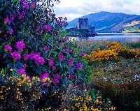 Eilean Donan Castle, Scottish Highlands, Scotland, United Kingdom Orignially built in 1230, rebuilt 1912    Lochs Alsh, Long, and Duich
