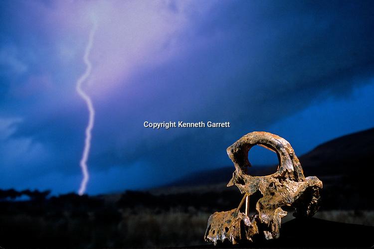 DOH; The First Steps,Broken Skull, STW 847, Lightning, High veld, Swartkrans, South Africa